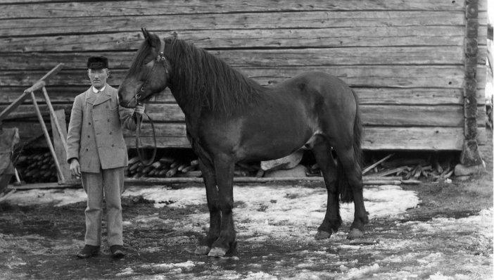 Jonas med hingst 1901