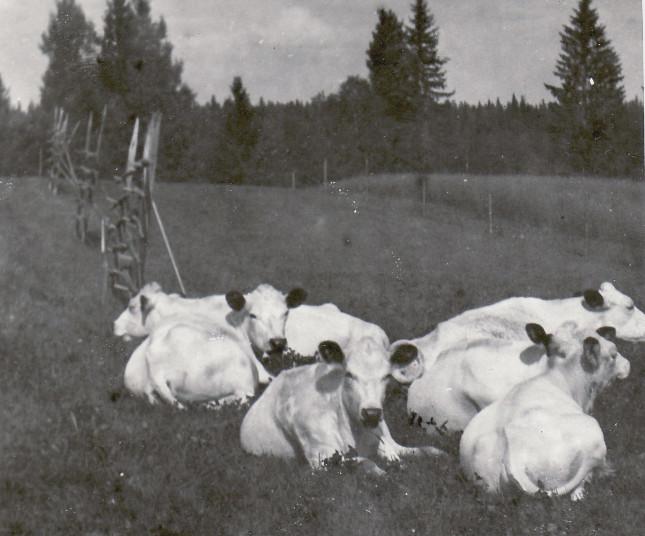Korna 1961