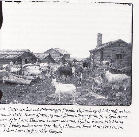 Fäbod Dalarna år 1901