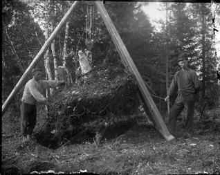 Backman t h och drängen nyodlar 1905