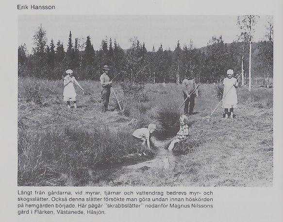 Skogsslåtter