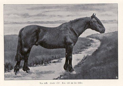 118,Goder III
