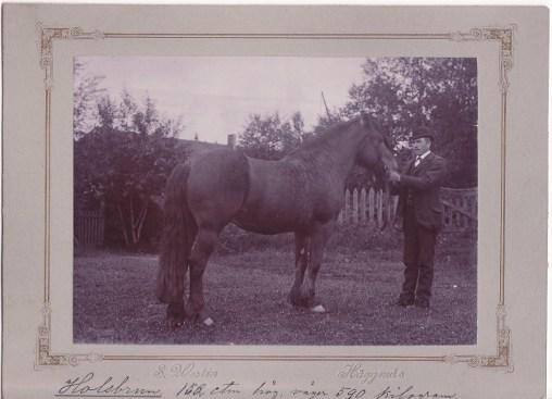 Holsbrun 205 juli 1897