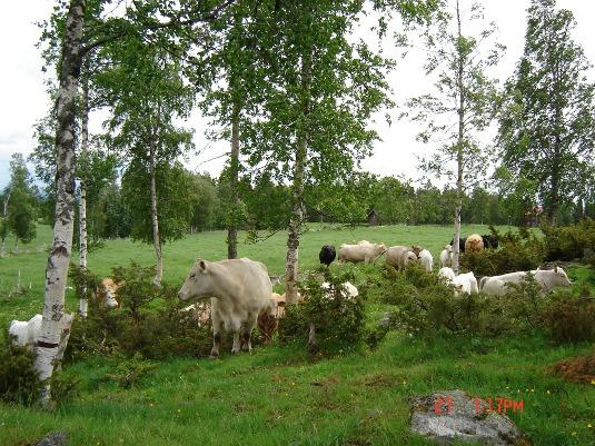 Från busvebacken mot kornhärbret