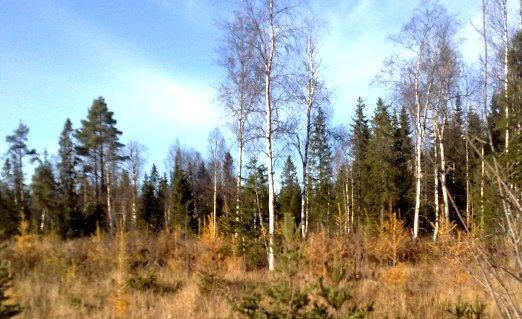 Plantering 2007 av lärk-gran, foto h-10