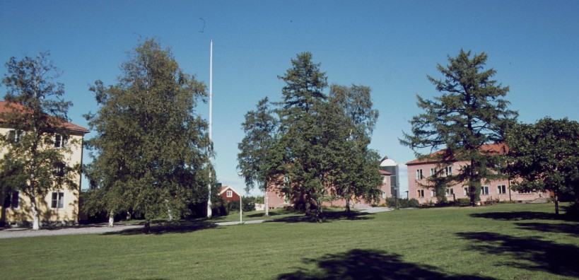 Torsta 1977