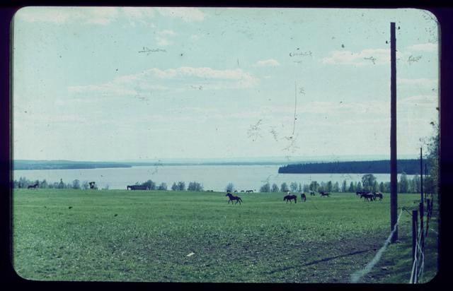 Årskull 1964